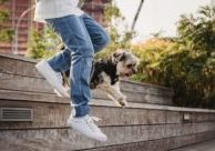 pet-joint-health